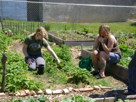 Melissa and Rachel in the strawberry patch.